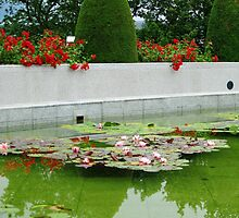 Roses and Water Lilies by Kathryn Jones