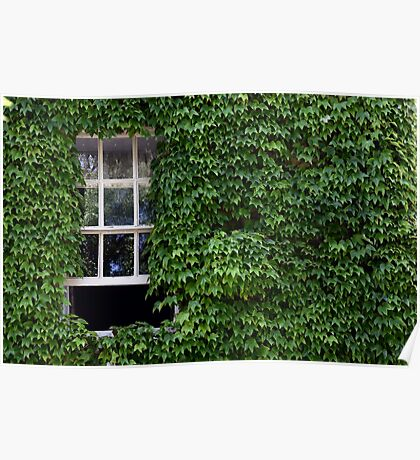 Window on leafy Cotswolds house facade, UK Poster