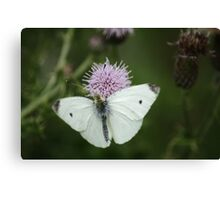 Small White On Thistle Canvas Print