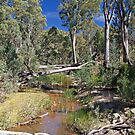 Creek within Wilpena Pound, South Australia by johnrf