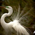 Great White Egret by TJ Baccari Photography