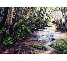 Along the Creek, Blue Mountains Photographic Print