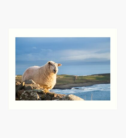 Donegal Sheep Art Print