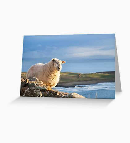 Donegal Sheep Greeting Card