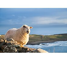 Donegal Sheep Photographic Print