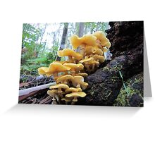 Honey Fungus Spectacular Greeting Card