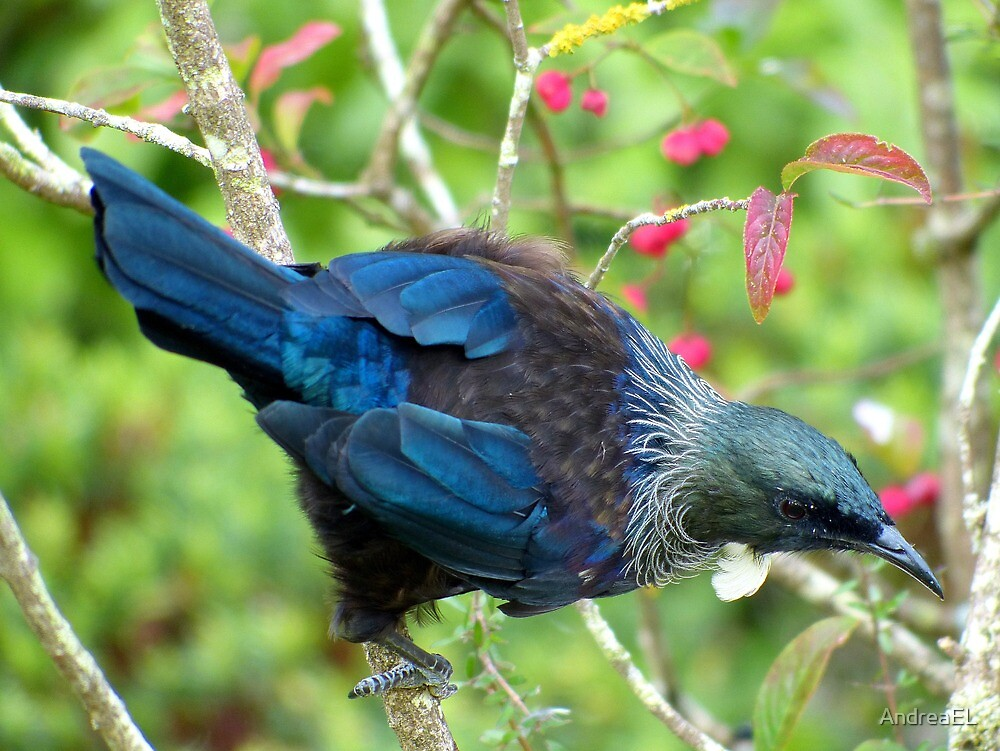 Hey...Where Is The Nectar Bowl - Tui - NZ by AndreaEL