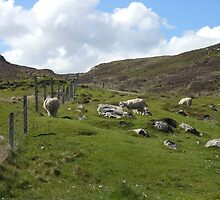 Pastoral Scene, Isle of Lewis, Outer Hebrides by BlueMoonRose