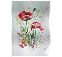 Little poppies Poster