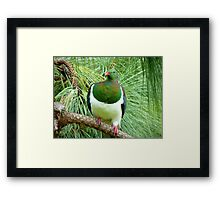 Did You Knock On My Wood? - Wood Pigeon - NZ Framed Print