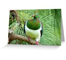 Did You Knock On My Wood? - Wood Pigeon - NZ Greeting Card