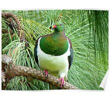 Did You Knock On My Wood? - Wood Pigeon - NZ Poster