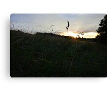 Sunset through the grass Canvas Print