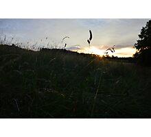 Sunset through the grass Photographic Print