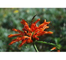 Orange Bursts Photographic Print