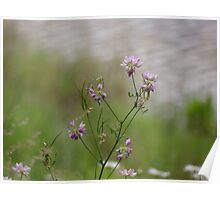 Crown Vetch by the lake Poster