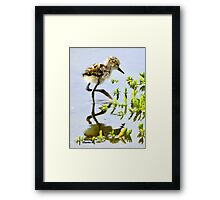 Just Hatched Framed Print