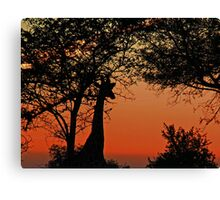 A Giraffe Sunrise Canvas Print