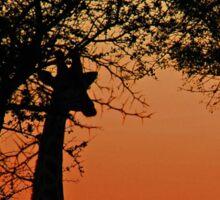 A Giraffe Sunrise Sticker