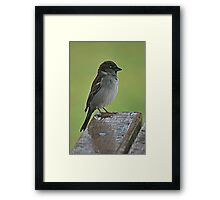 Sparrow Hello Framed Print