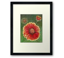 Red and Yellow Gaillardia Flower Framed Print
