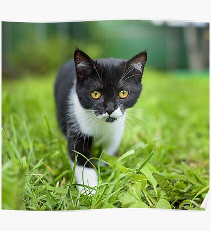 little black kitten in a grass Poster