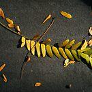 Autumn has Arrived by elasita