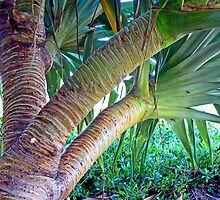 Under the Pandanus by Graeme  Hyde