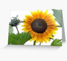 Dwarf Sunflower Greeting Card