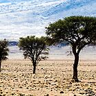 Trees on the Desert by Marylou Badeaux
