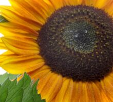 Dwarf Sunflower Sticker