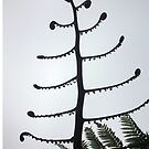 Silver Fern koru silhouette by jezkemp
