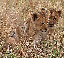 Lion Cubs, Central Kalahari Game Reserve. Botswana, Africa by Adrian Paul