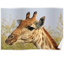 Giraffe - African Wildlife Background - Colorful Solitude Poster