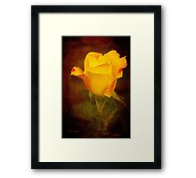 Rosebud Painted on Velvet Framed Print