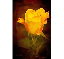 Rosebud Painted on Velvet Photographic Print