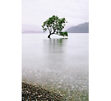 The Tree in the Lake II Photographic Print