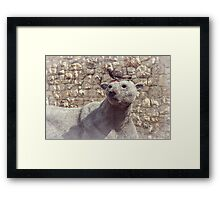 The Pigeon and the Polar Bear Framed Print