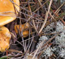 Chantrelle Mushrooms in Their Natural Habitat Sticker