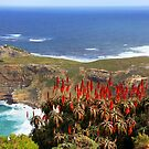 Cape of good hope by gruntpig