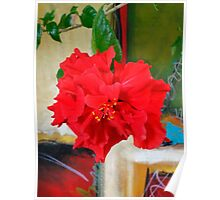 Red Hibiscus Bloom  Poster