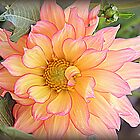 Dahlia Days by naturelover