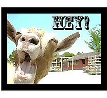 Goat Saying Hey! Photographic Print
