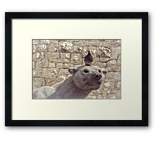 The Polar Bear and the Pigeon Framed Print