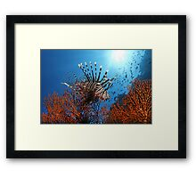 Spiny Beauty Framed Print