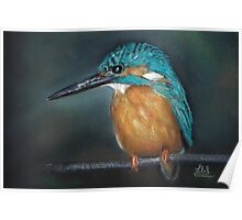 Lone Kingfisher Poster