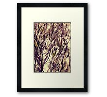 Patterns in my Winter Garden Framed Print