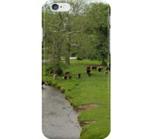 Wallkill Valley Rail Trail View iPhone Case/Skin