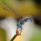 Blue Dasher #1  by Kane Slater