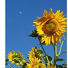 Sunflower Bee & Moon by Whoisthepoet